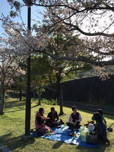 山口桜花見